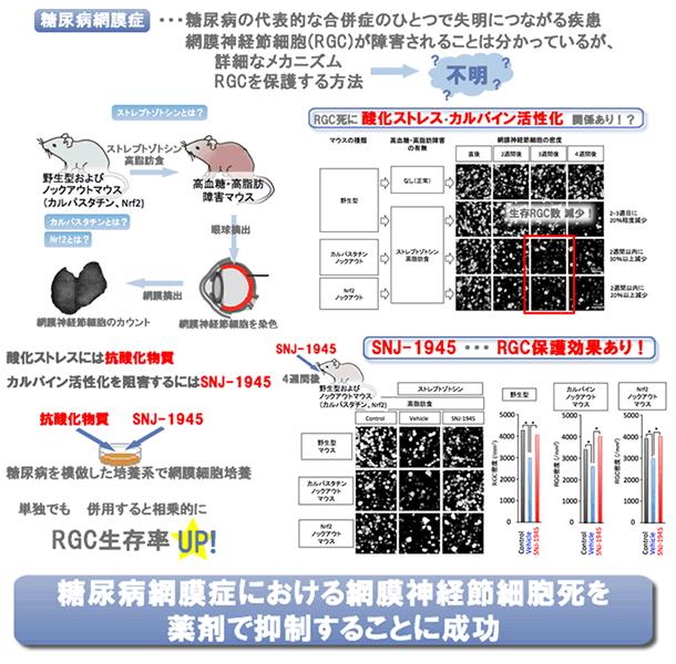 糖尿病網膜症における網膜神経節...
